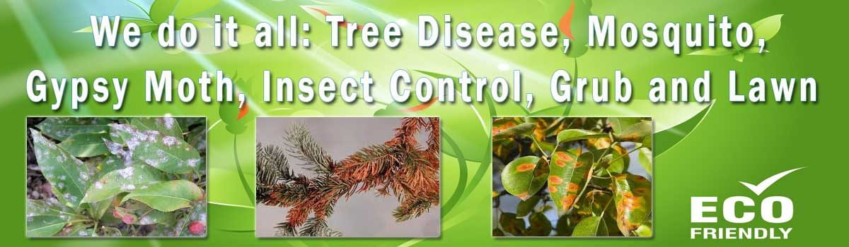 Go to: We do it all Tree Disease Control