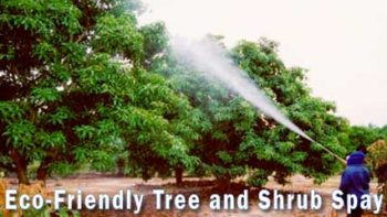 Permalink to: Eco Tree Spraying