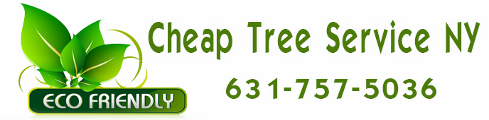 Cheap Tree Service NY